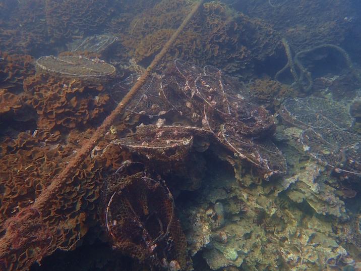 カワラサンゴと一体化している古い籠網やロープ